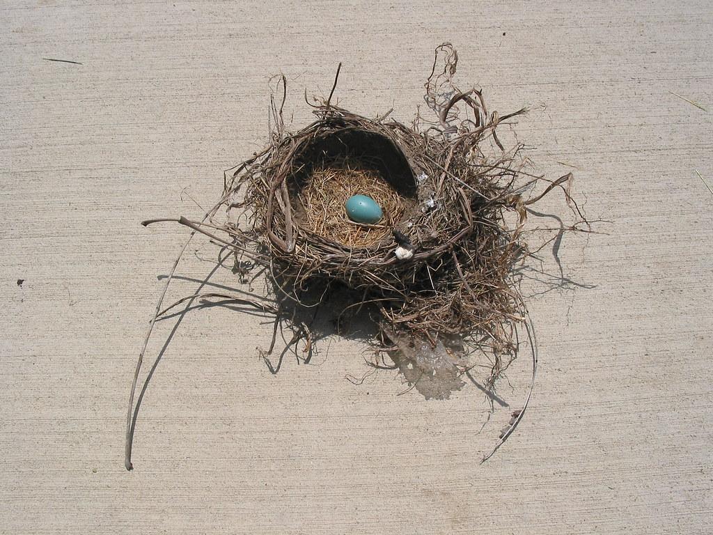 Robin S Nest Tea Room