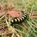 Caterpillar in Sweden
