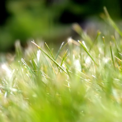 Green, Green Grass | by firda
