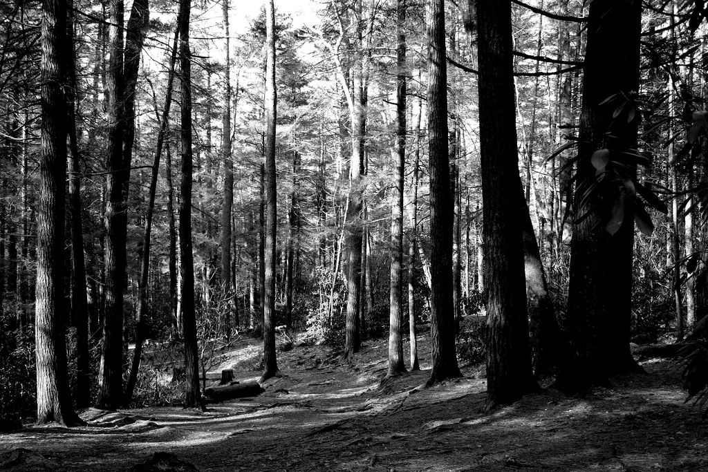 The Forest Floor | Days like today are far and few between ...
