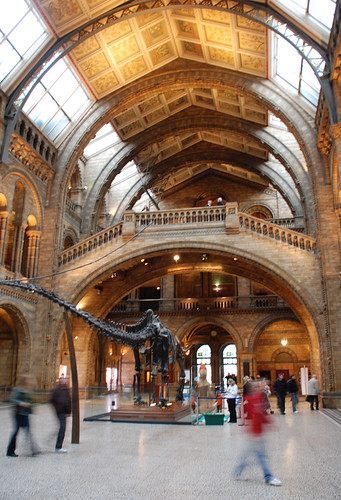 Foyer Museum Uk : Entry hall natural history museum london phillip