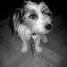 My Perfect Dog Pouka !