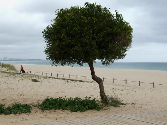 Luz Beach Cafe