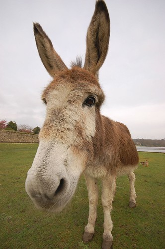 Wide angle on donkey donkey made weird noises when i got - Craigslist farm and garden louisville ...