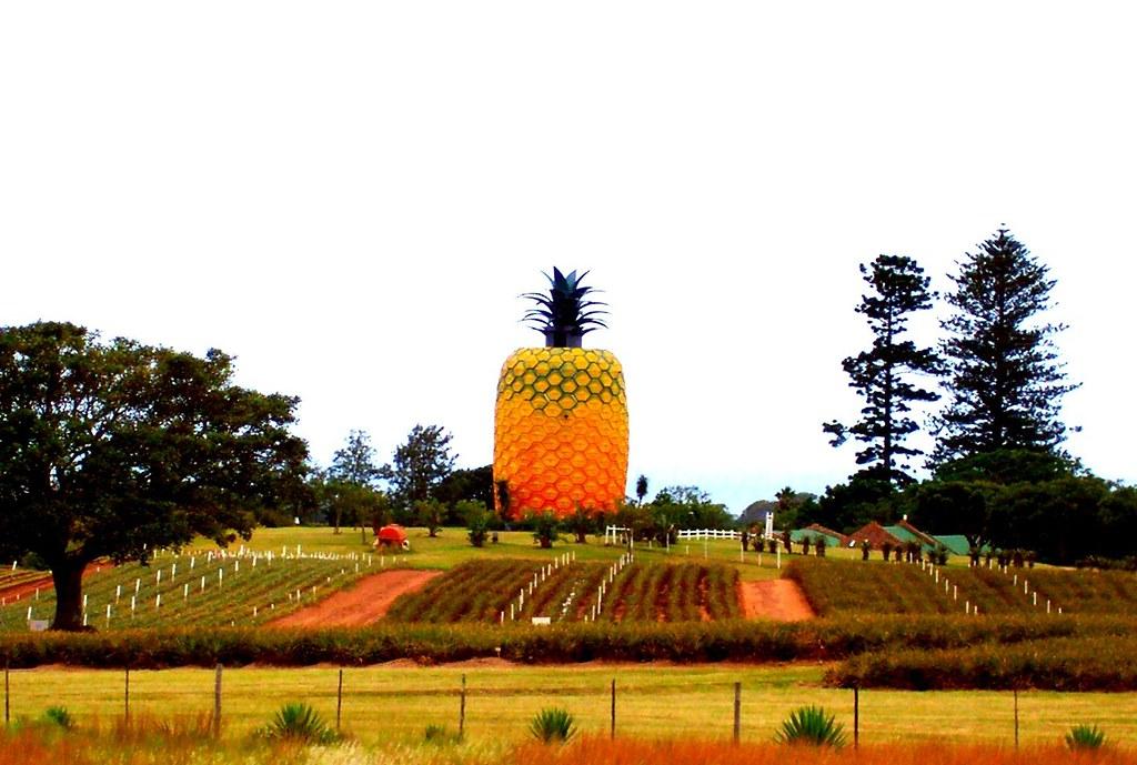 Image result for Bathurst pineapple