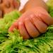 Comfy Green Rug