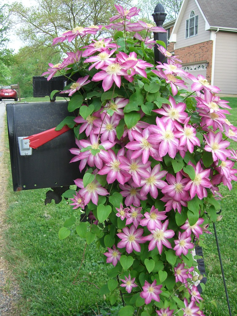 Mailbox Flowers Steve N Dede Flickr