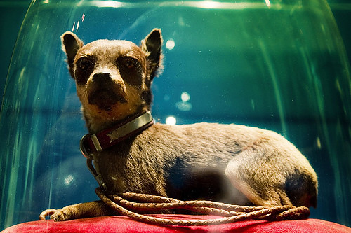 Victorian Dog Taxidermy J Naturalia Flickr