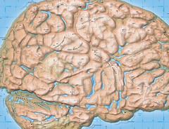 Brainland - Outward Bound