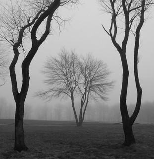 foggy scene in black and white | by Steve from NJ