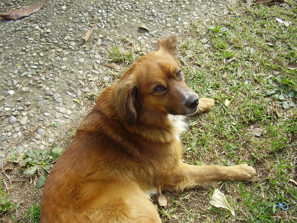 Mi perro bal vestido de perro en el jard n de casa flickr - Jardin para perros ...
