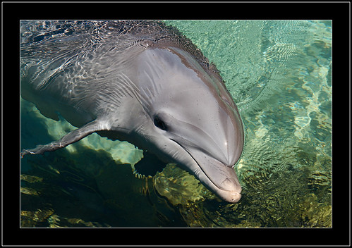 Inshore Bottlenose Dolphin | by Barbara J H
