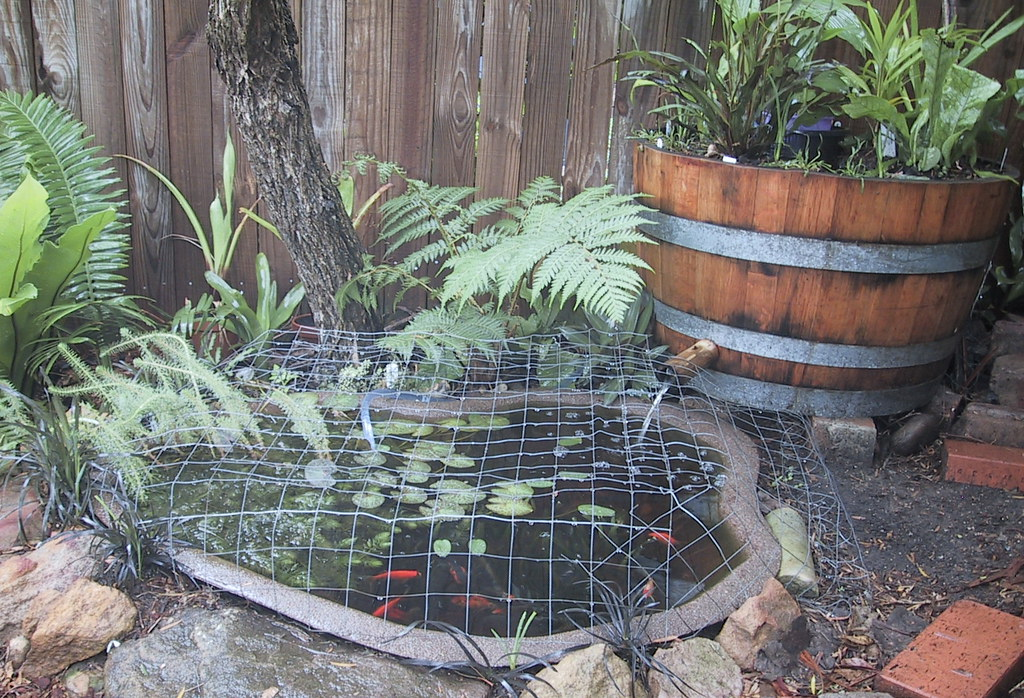 Fish pond with barrel garden for filter bio filtered for Small pond filter design