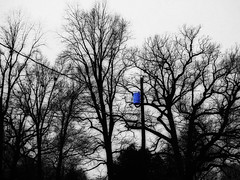 White Sky, Black Trees and Blue Transformer | by birdtoes