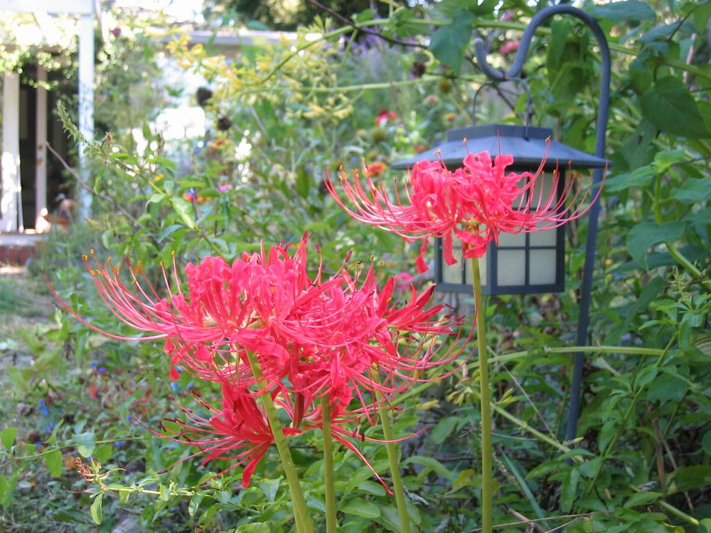 Permalink to Flowers By Melinda