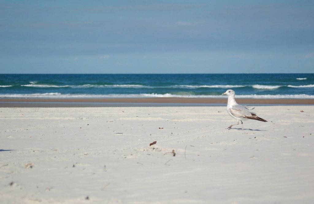 New Symerna Beach Condo Rentals