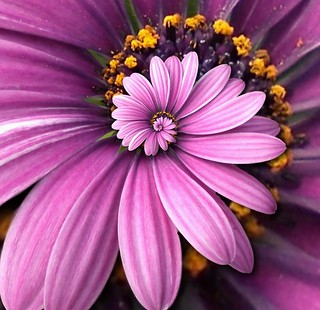 Another Purple Flower Droste | by Josh Sommers