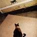 cat confronted by dreams vs. reality dilemma