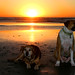 Two Dogs at Sunset