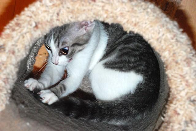 En espaçant les différentes activités, le chat sera davantage stimulé.