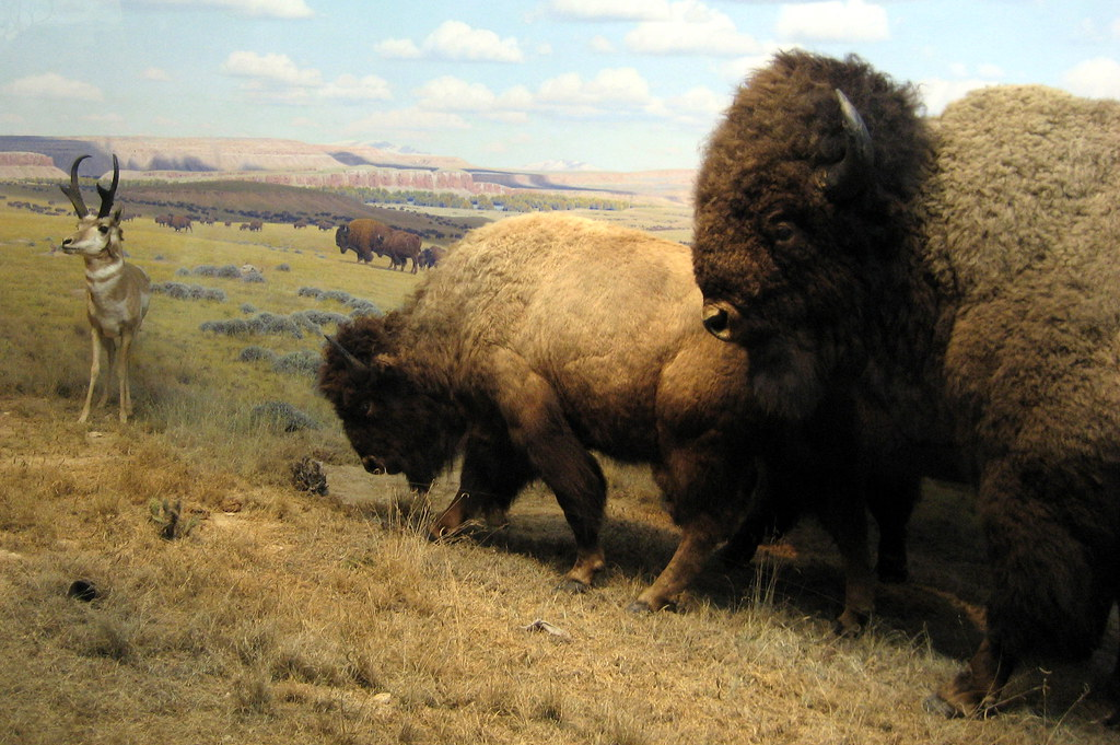 american great plains animals - photo #42