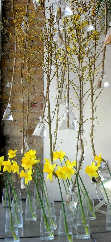 Spring Window Display Single Stems Of Daffodils Have Been Flickr