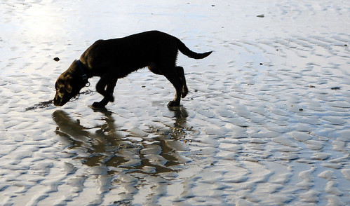 Sniffing the sea shells | by Roo Reynolds