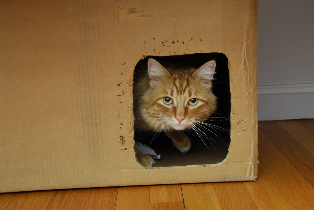 Cat Runs Under Other Cat Gif
