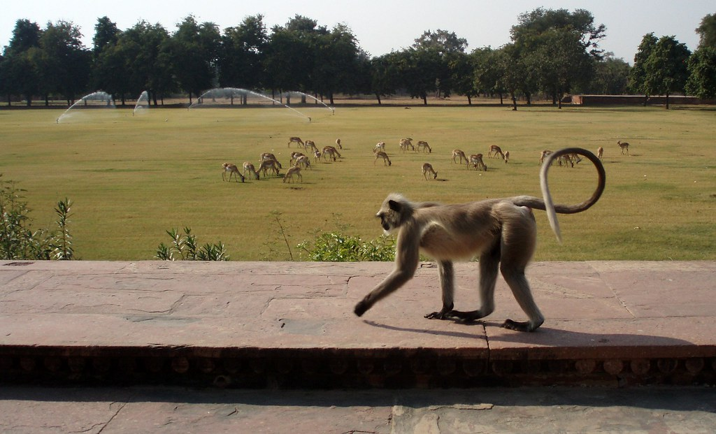 Monkey walking peacefully | Check out my portfolio and other… | Flickr