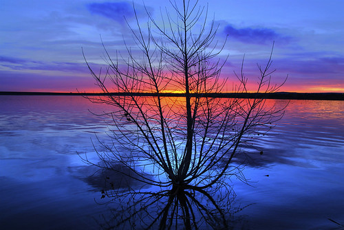 Lone Tree at Sunrise | by Thad Roan - Bridgepix