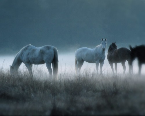 Horse in Fog | by TexasTea