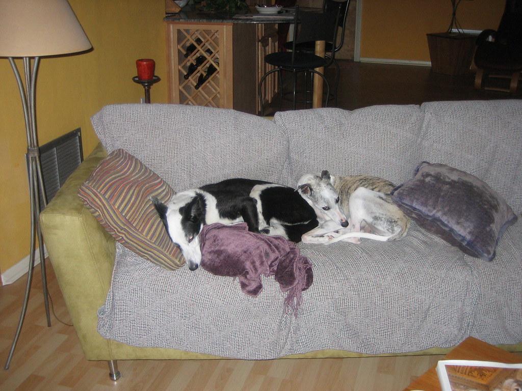 Doggie Day Care Long Island New York