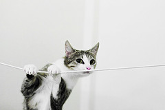 Cat on a string | by Stefan Tell