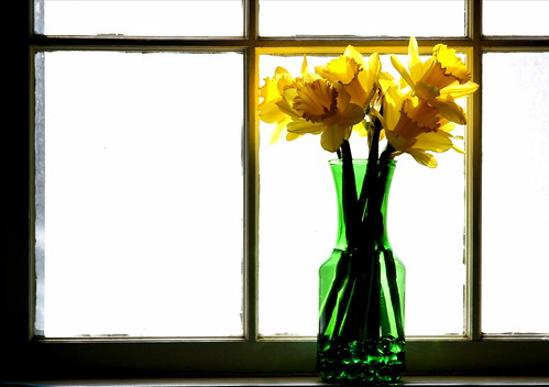 daffodils in window | by Muffet