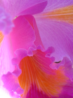 orchid ruffles | by Karen Rzonca
