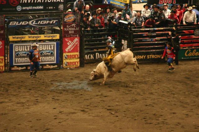 Madison Square Garden Bull Riders Championship Pixxiestails Flickr
