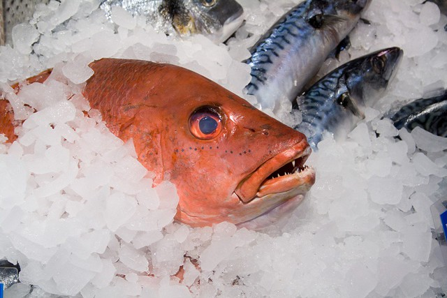 fish on ice | Julian Burgess | Flickr