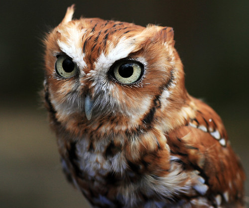 Whooo | by ` Toshio '