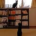 Bookshelf and cats