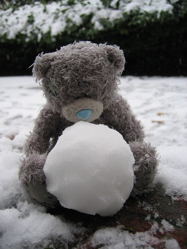 Grey Bear and his first snowball | by Pug!