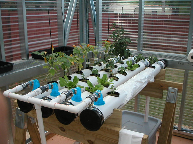 Nft Hydroponic System In Our Greenhouse In The Nft