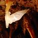 brooks cave, jackson county, florida 8