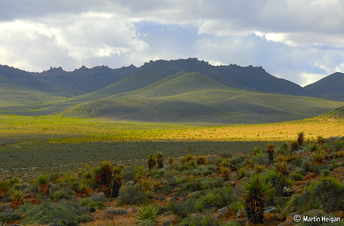 Northern Cape Landscape Aloe Habitat Late Afternoon