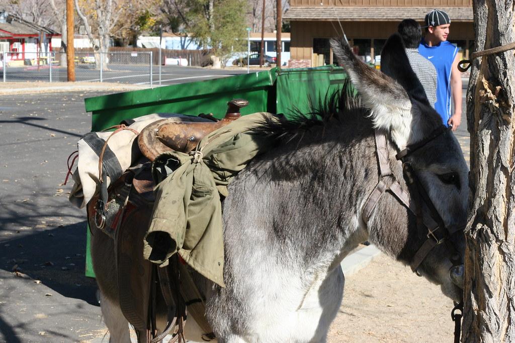 Ugly Donkey | Ugly Don...