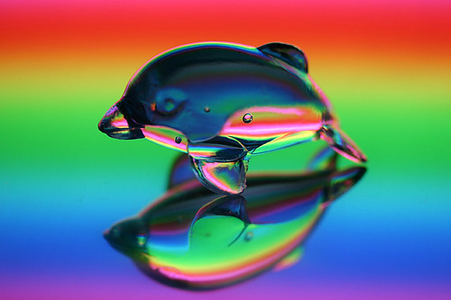 rainbow dolphin | * Yumi * | Flickr