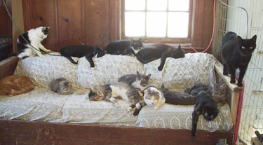 Image result for sleeping cat on couch