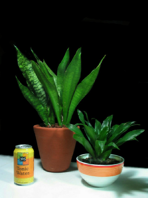 Easy care flowerless indoor plants true year round for Easy maintenance flowers and plants