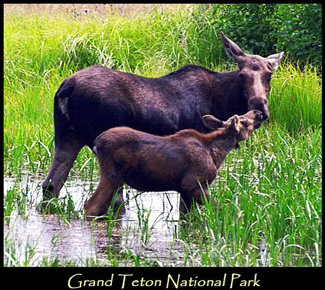 map grand teton national park with 89722994 on 4139419388 in addition Chapel of the Transfiguration besides Short Grand Teton National Park Hikes moreover 24011474471 as well Devils Garden Arches.
