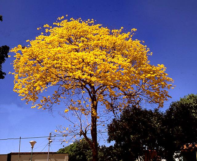 plantas de venezuela flickr