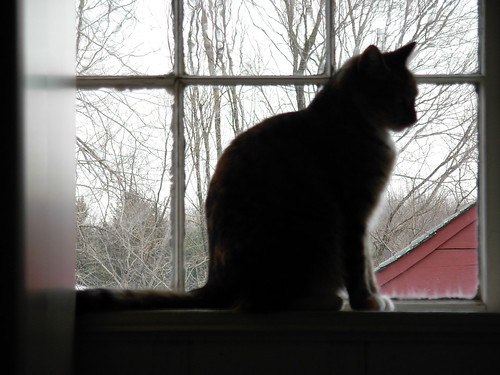 Cat in the window | by Auntie Lola